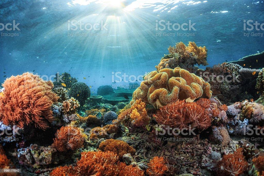 Arrecife  - foto de stock