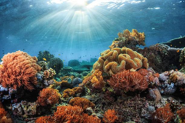 barriera corallina  - fondale marino foto e immagini stock