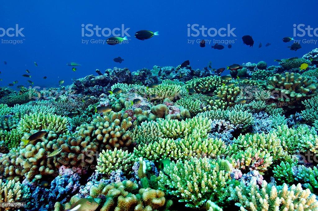 Reef scenic stock photo