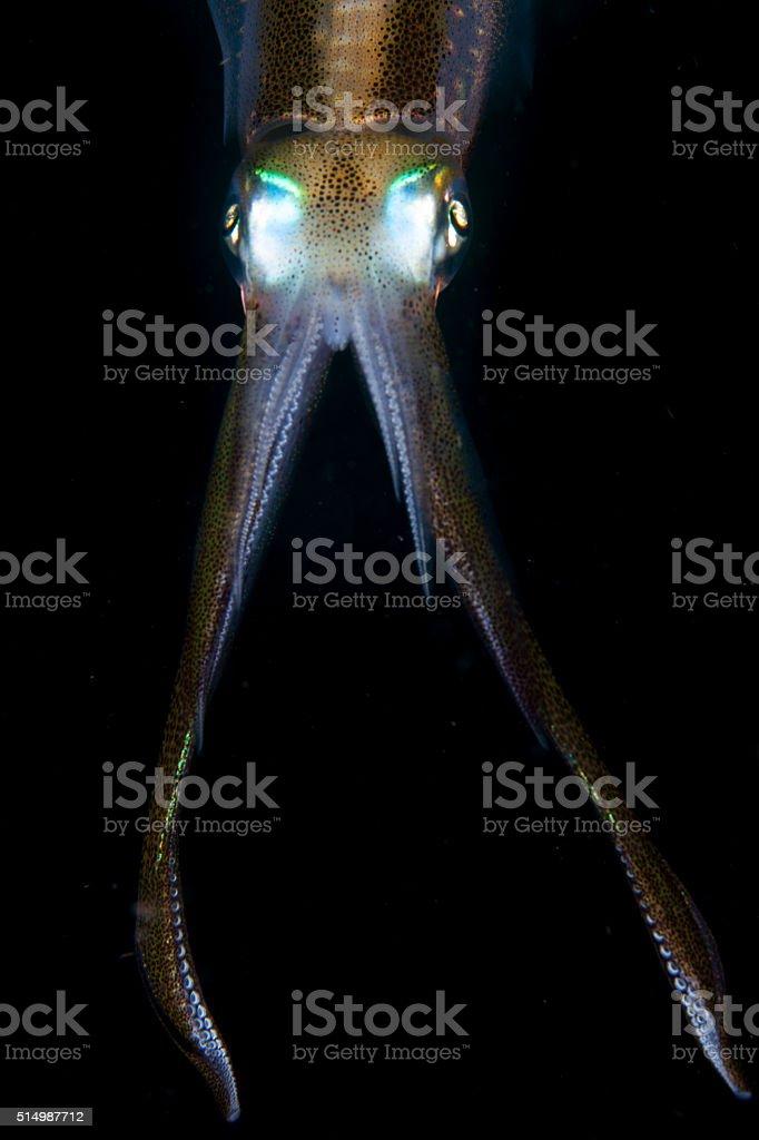 Reef Squid Tentacles stock photo