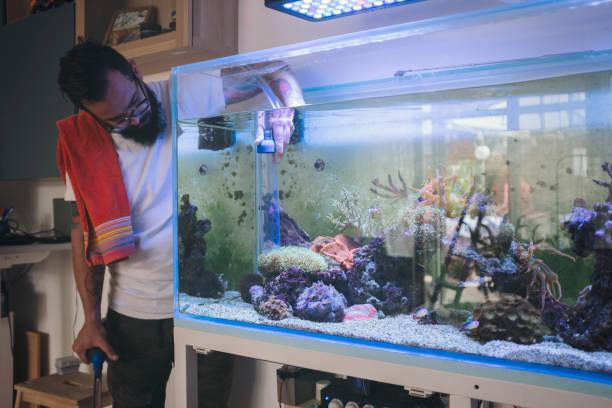 5 674 Home Aquarium Stock Photos Pictures Royalty Free Images Istock