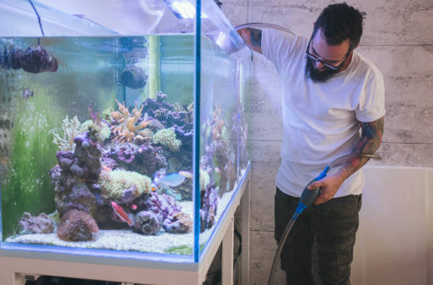 Reef Tank Maintenance Bearded man cleaning reef tank. aquarium stock pictures, royalty-free photos & images