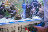 Man cleaning reef tank with siphon.