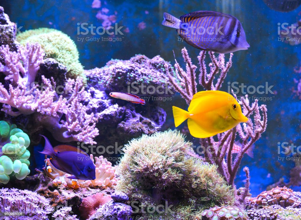 Reef Tank Marine Aquarium Filled With Water For Keeping Live