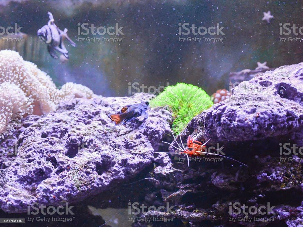 암초 탱크, 해양 수족관 물고기와 식물의 전체. - 로열티 프리 0명 스톡 사진