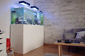 Living room with reef tank