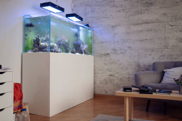 reef tank - home aquarium stock pictures, royalty-free photos & images