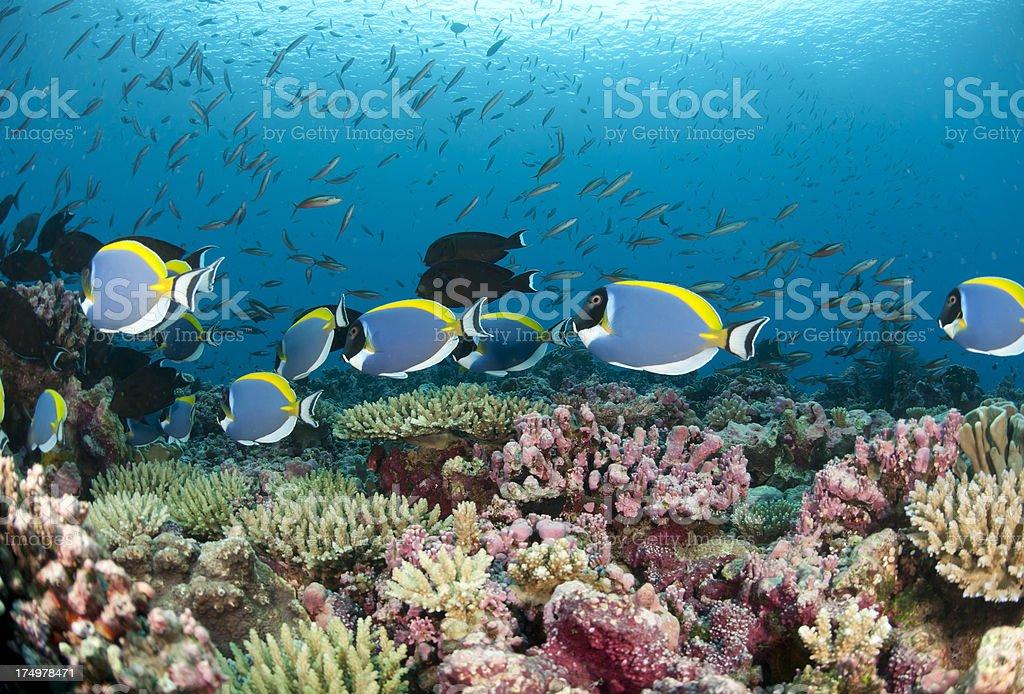 reef vista stock photo
