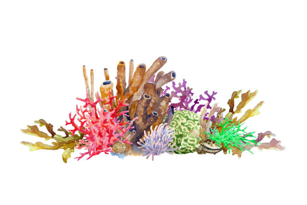 Reef with colorful corals, sponge, anemone and shell. Underwater landscape, hand drawn watercolor. Reef with colorful corals, sponge, anemone and shell. Underwater landscape, hand drawn watercolor illustration. polyp corals stock pictures, royalty-free photos & images