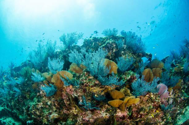 reefs at the sea of cortez - immerse in the stars foto e immagini stock