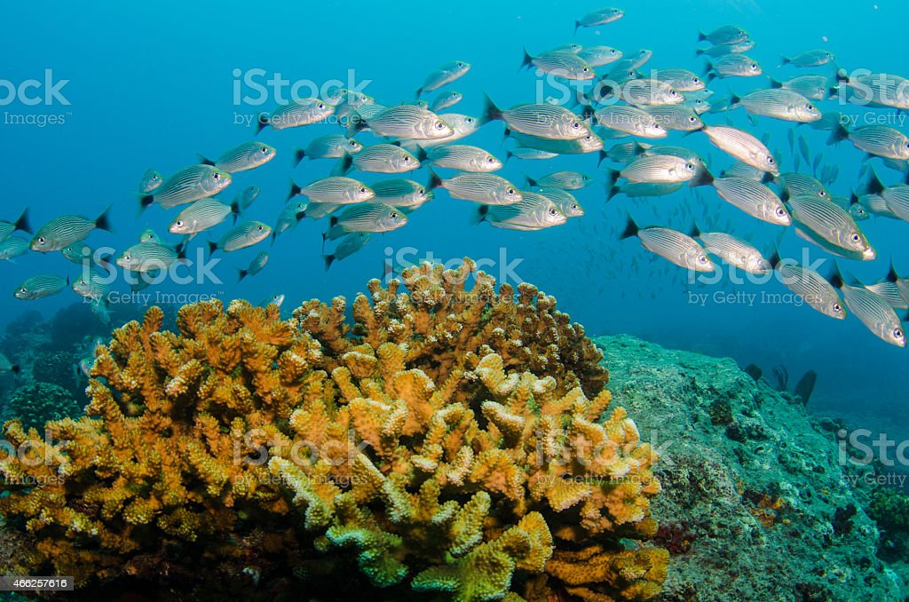 Reefs at the sea of cortez stock photo