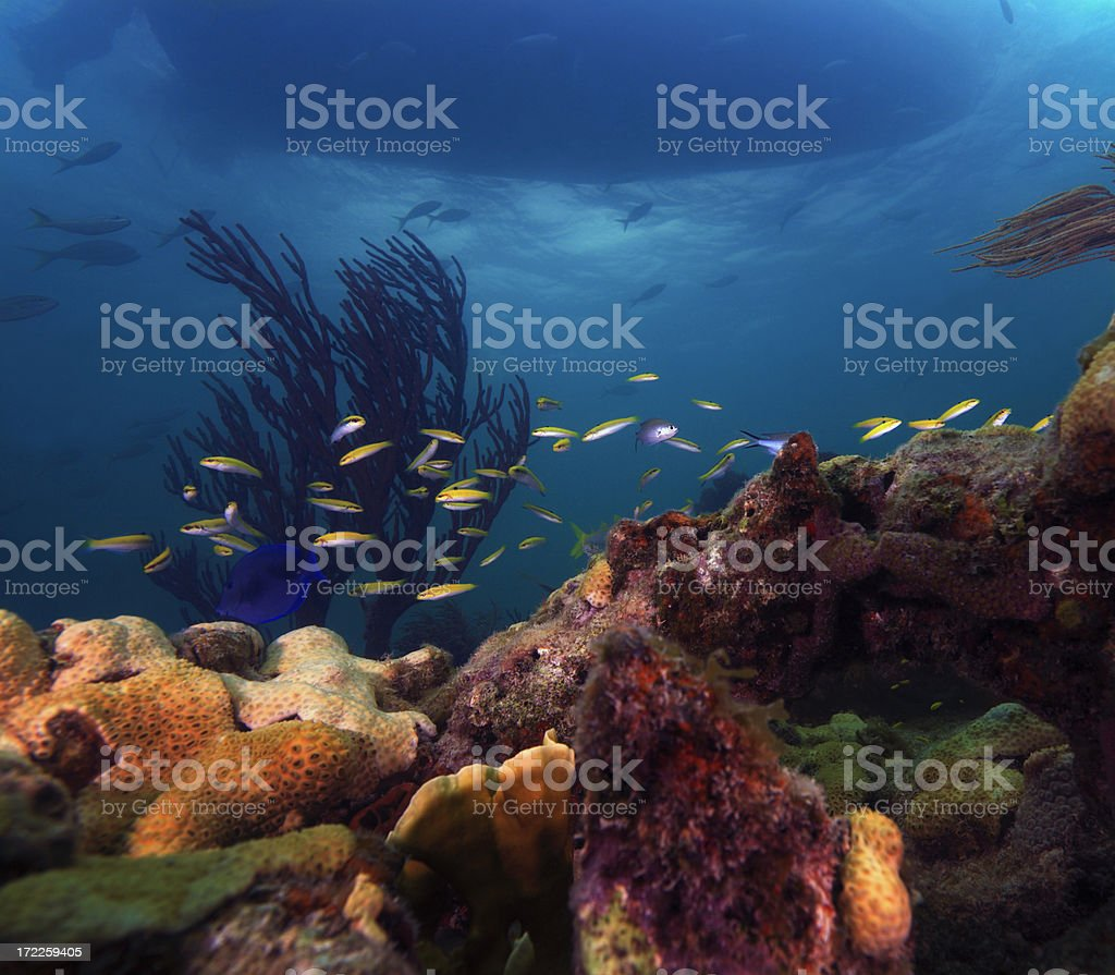 reefscape stock photo
