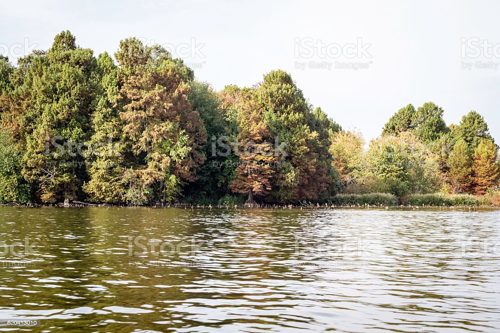 Reelfoot Lake in Tennessee stock photo