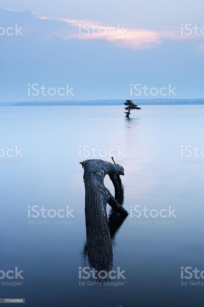Reelfoot Lake stock photo