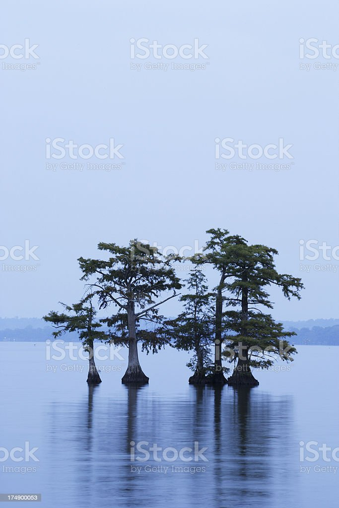 Reelfoot Lake (V) stock photo