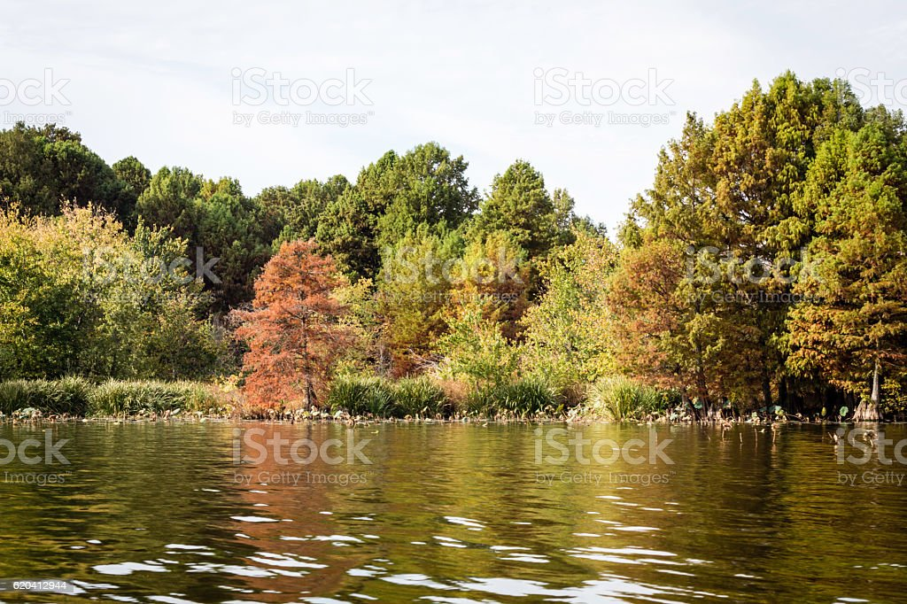 Reelfoot lake Tennessee Cypress background stock photo