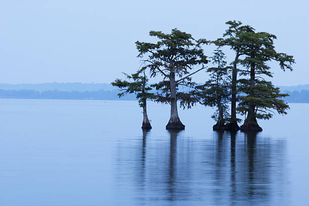 reelfoot lake with trees in water - bald cypress tree stockfoto's en -beelden