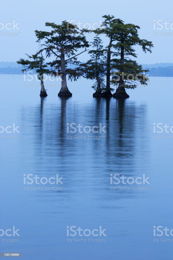 Reelfoot Lake with Trees in Water stock photo