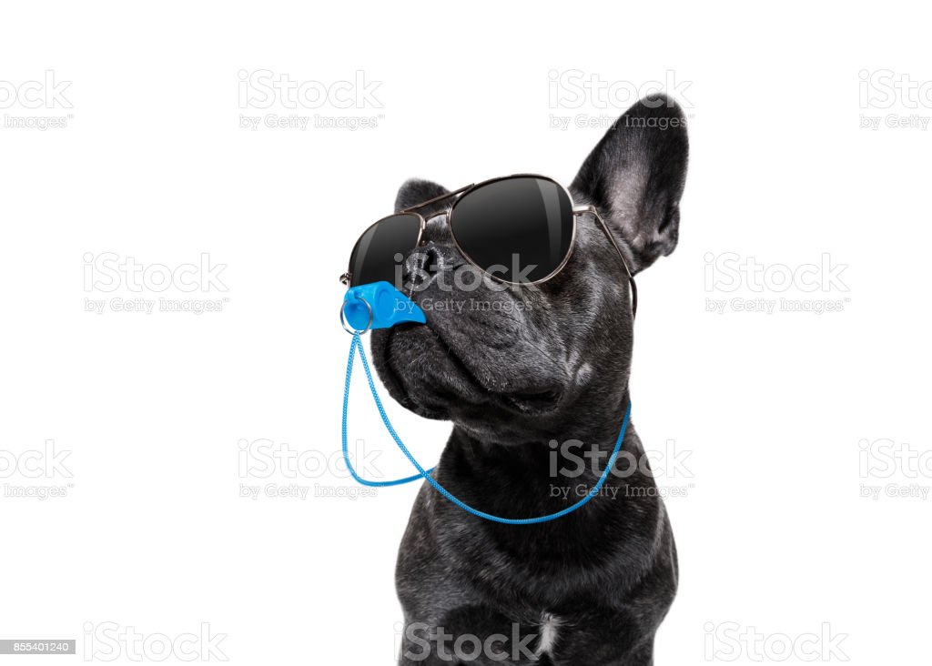 Referee dog with whistle royalty-free stock photo