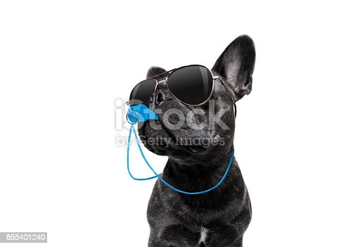 istock Referee dog with whistle 855401240