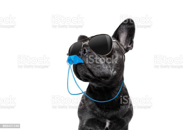 Referee dog with whistle picture id855401240?b=1&k=6&m=855401240&s=612x612&h=go9uzgi p21ep6a4u73p qe fpcntdl4fitlaui3zjq=