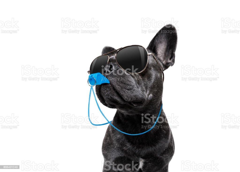 Cão de árbitro com apito - foto de acervo