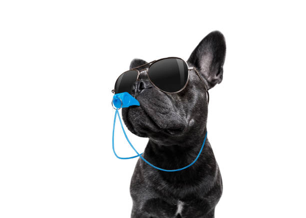 Referee dog with whistle stock photo