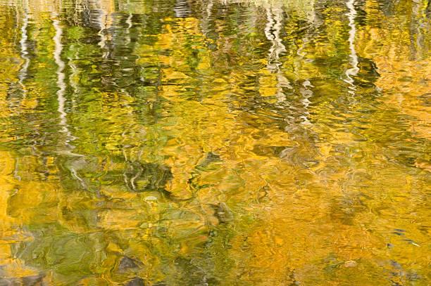 Reflected Aspens stock photo