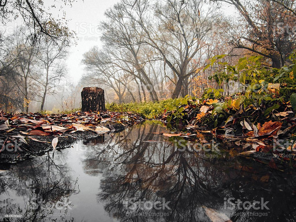 Reflected in the autumn river royalty-free stock photo