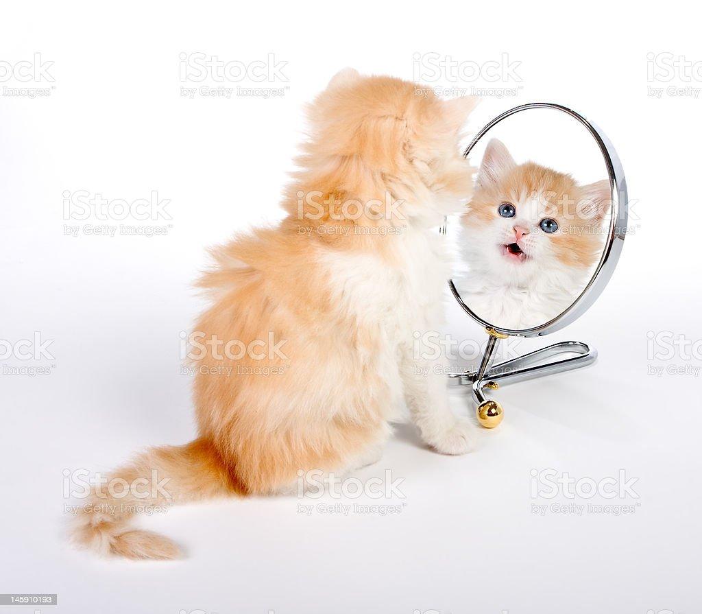 Reflected kitten royalty-free stock photo