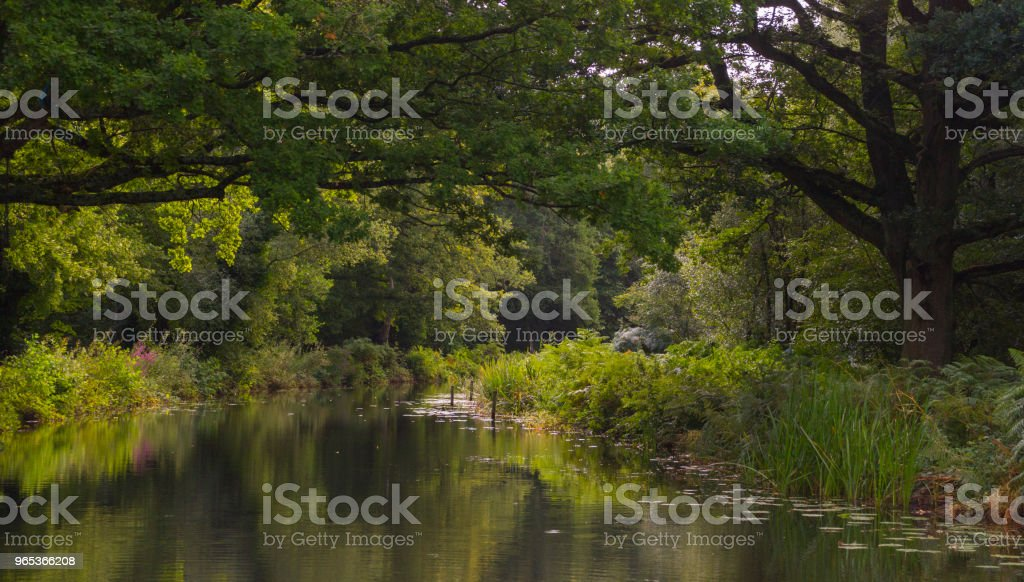 Reflected trees in water in summer stock photo