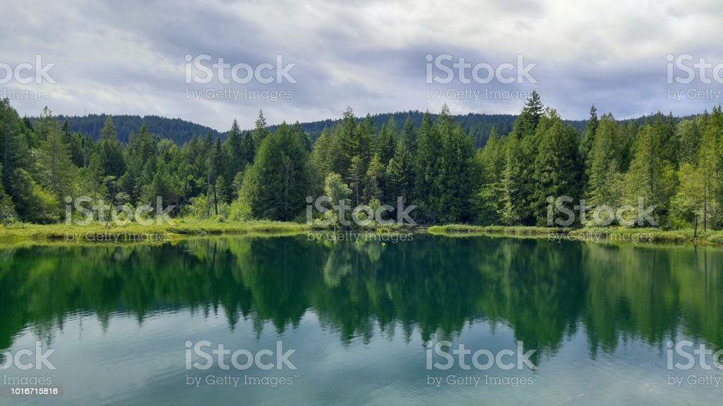 A reflecting forest in a green river stock photo