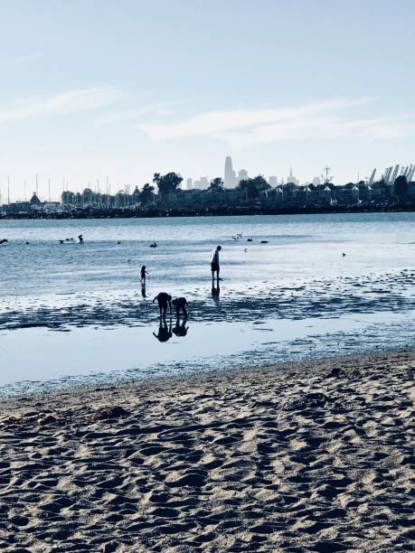 Reflecting Beach combers look for natural treasures on the island of Alameda across the San Francisco Bay from the city. alameda california stock pictures, royalty-free photos & images