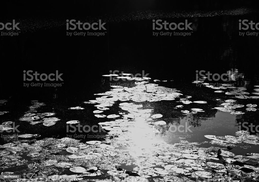Reflecting water lilies landscape background royalty-free stock photo