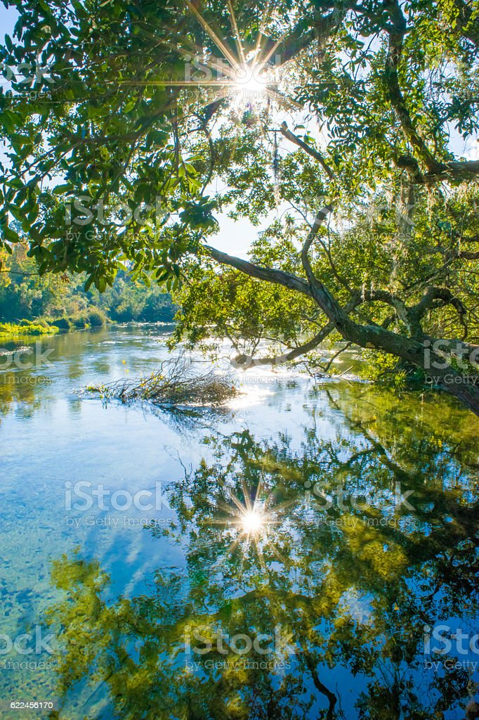 Reflection in Spring Water stock photo