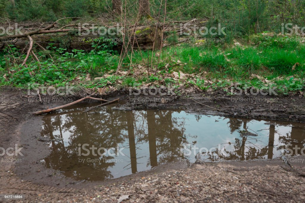 reflection in  water, nature reserve De Malpie, Valkenswaard in The Netherlands stock photo