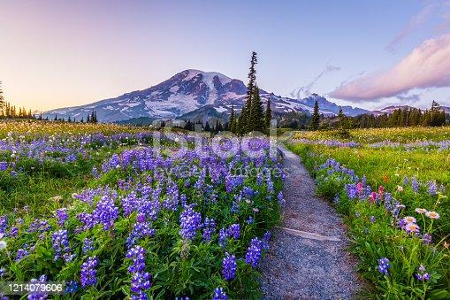 Reflection lake trail-Summer, Mount Rainier