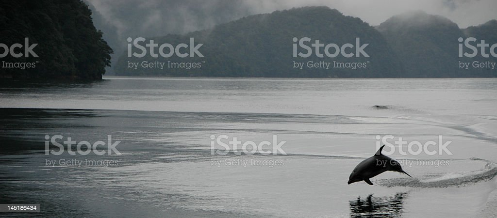 Reflection of a lake with a dolphin stock photo