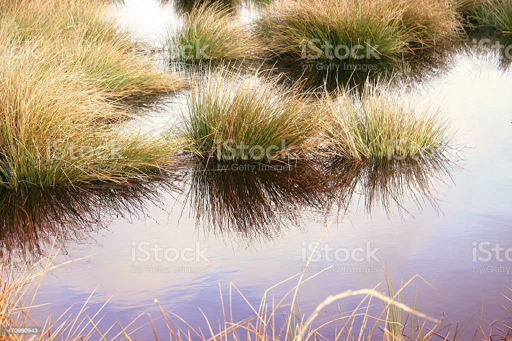 reflection of a national park stock photo