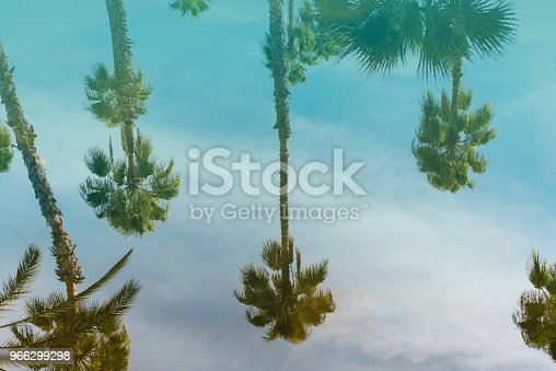 Reflection of a Palm Trees in the Water as Background