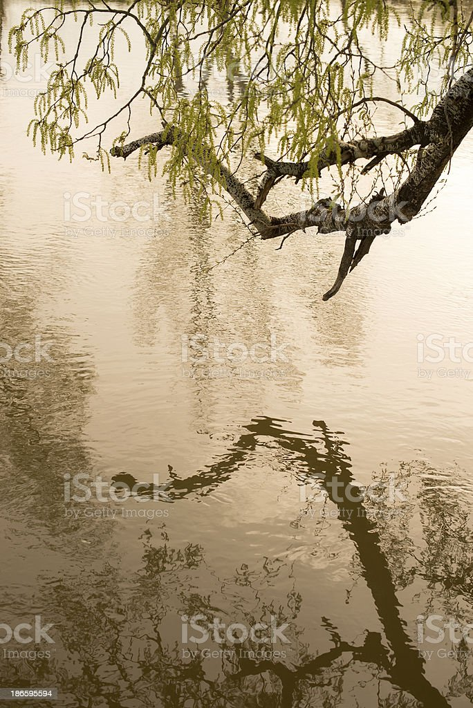 Reflection of branch on a water stock photo
