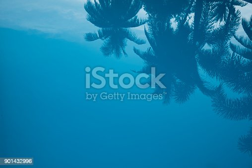 istock Reflection of coconut tree 901432996