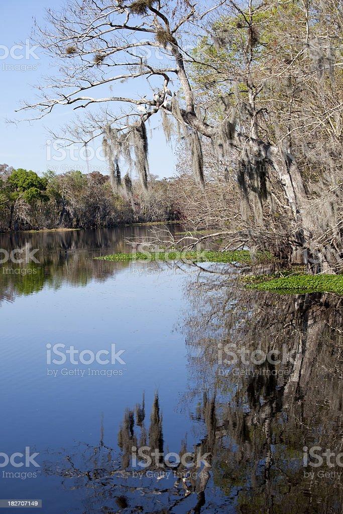 Reflection of moss stock photo