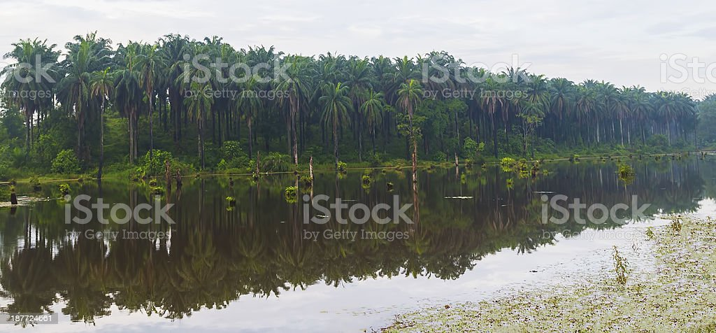 Reflection of oil palm plantation royalty-free stock photo