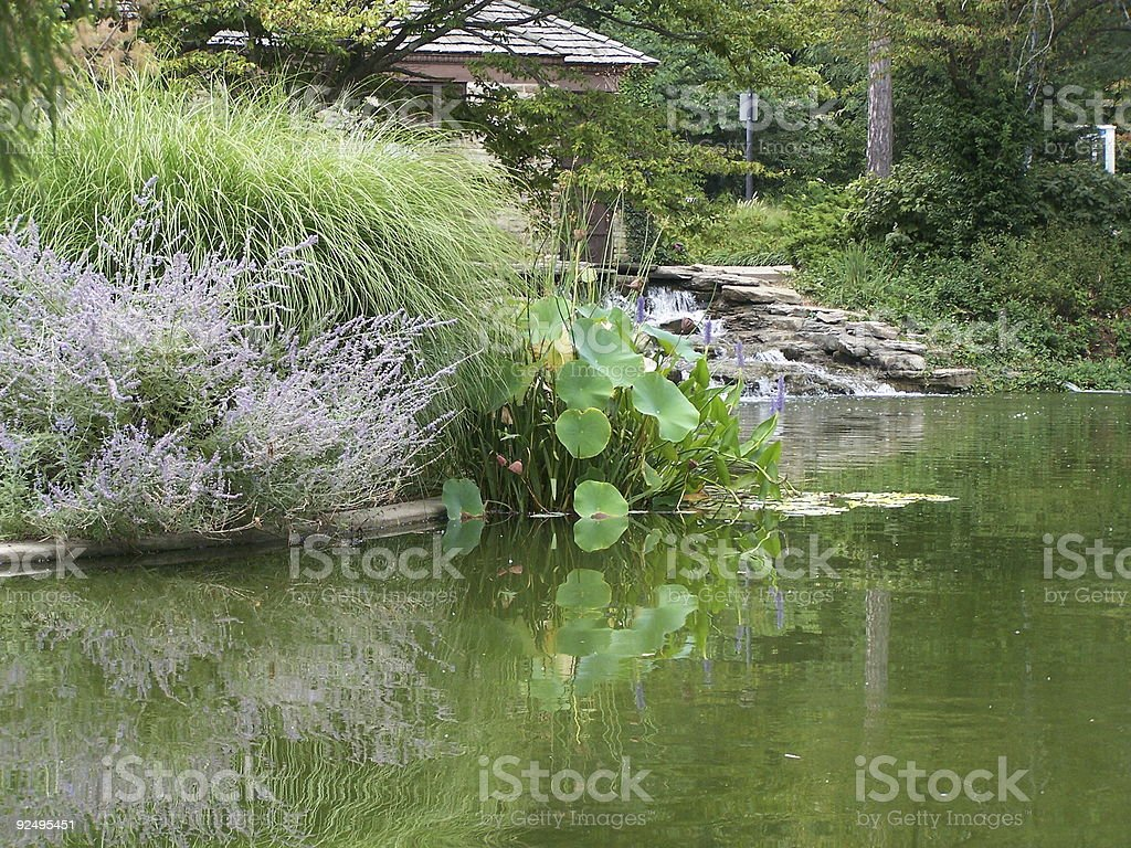 reflection of plants in lake royalty-free stock photo