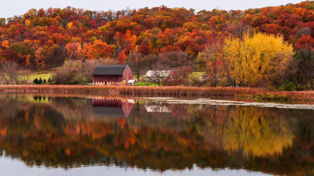 reflection of red barn during fall in southern minnesota reflection of red barn during fall in southern minnesota reflection lake stock pictures, royalty-free photos & images