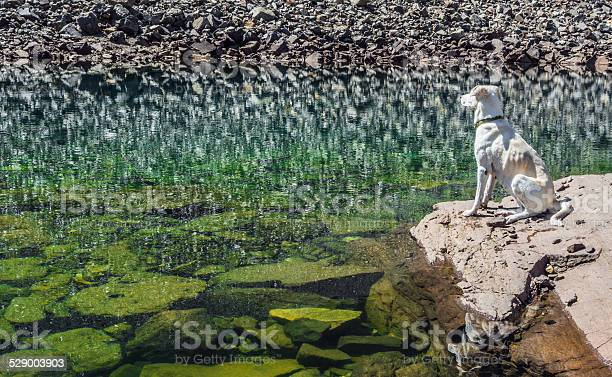 Photo of Reflection of the rocky shore in a mountain lake