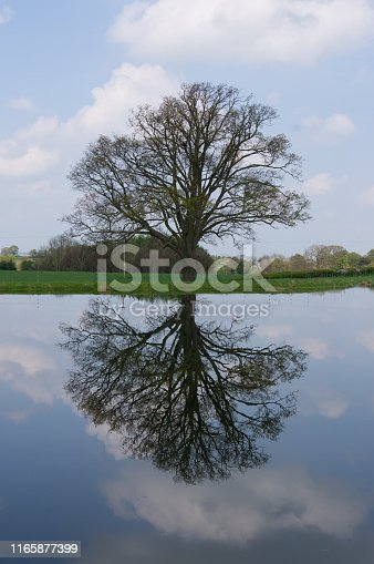 Reflection of large tree in lake with clouds and sky making a perfect copy.
