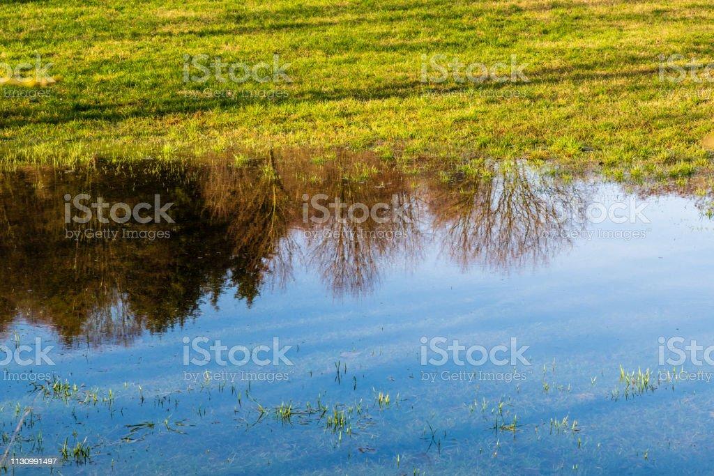 Reflexion von Bäumen und blauem Himmel in einer Pfütze auf einer Wiese – Foto