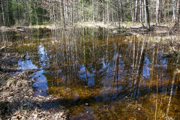 Spiegelung von Bäumen und blauem Frühlingshimmel in einem Waldsee – Foto